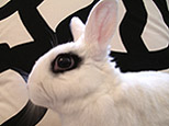 The Brooklyn Bunny webcam